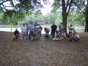 The St. Petersburg Corgi July Meetup (FL)