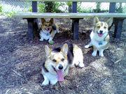 Riverwalk Dog Park