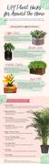 DIY Plant Hacks