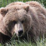 Bears-15-150x150