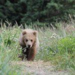 Bears-8-150x150