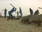 Please sign for the Seals of Namibia