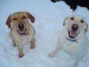 Boe & Gus