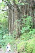 Чудо дерево... из страны На'Ви...