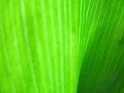 Зеленое пламя исцеления и изобилия 3