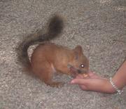Вкусные орешки с моей руки