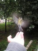Птичьи истории-1