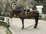 милая лошадка)