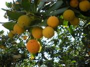 Неизвестные мне фрукты