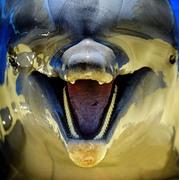Дельфинья улыбка - ЛЮБОВЬ!!!