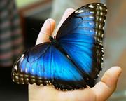голубая мечта на ладони