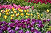 Бал тюльпанов