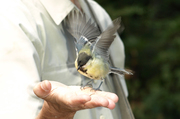 Общение с птицами