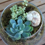 thumbs_succulent-garden-in-home-and-outdoor1-3