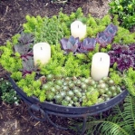 thumbs_succulent-garden-in-home-and-outdoor1-1