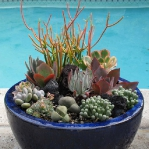 thumbs_succulent-garden-in-home-and-outdoor1-2