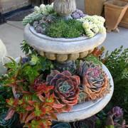 succulent-garden-in-home-and-outdoor