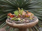 succulent-garden-in-home-and-outdoor1-4