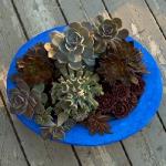 thumbs_succulent-garden-in-home-and-outdoor2-12