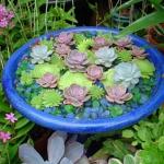 thumbs_succulent-garden-in-home-and-outdoor3-3