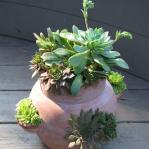 thumbs_succulent-garden-in-home-and-outdoor2-1
