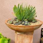 thumbs_succulent-garden-in-home-and-outdoor2-2