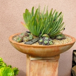 thumbs_succulent-garden-in-home-and-outdoor2-2