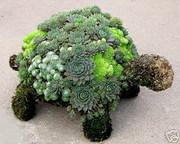 succulent-garden-in-home-and-outdoor1-8