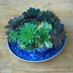 thumbs_succulent-garden-in-home-and-outdoor2-10