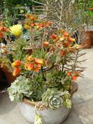 succulent-garden-in-home-and-outdoor1-10 (1)
