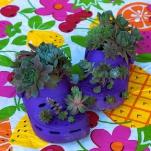 thumbs_succulent-garden-in-home-and-outdoor2-9
