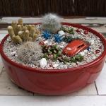 thumbs_succulent-garden-in-home-and-outdoor1-6