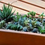 thumbs_succulent-garden-in-home-and-outdoor2-15