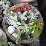 thumbs_succulent-garden-in-home-and-outdoor1-9