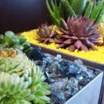thumbs_succulent-garden-in-home-and-outdoor3-5