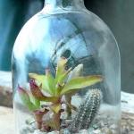 thumbs_succulent-garden-in-home-and-outdoor2-13