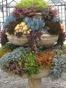 succulent-garden-in-home-and-outdoor1-5