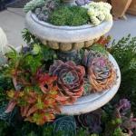 thumbs_succulent-garden-in-home-and-outdoor2-3
