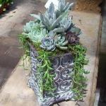 thumbs_succulent-garden-in-home-and-outdoor2-6