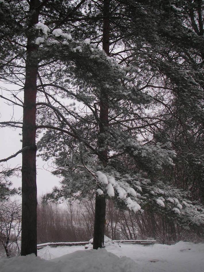 У истока реки Волхов (Ильмень озеро)