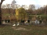 Восхитительная растительная и животная природа рядом с Букингемским дворцом