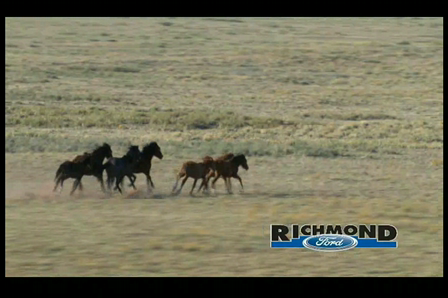 Roush Mustangs available at Richmond Ford in Richmond, VA TV and Web Video