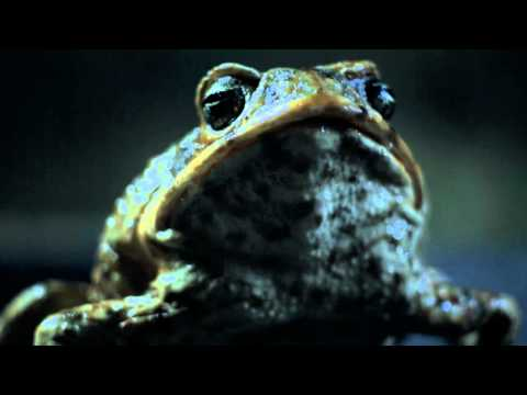 Ford of Australia: Cane Toad Road