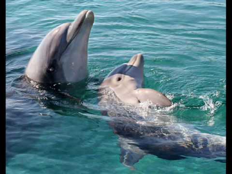 море,солнце,дельфины и надежда