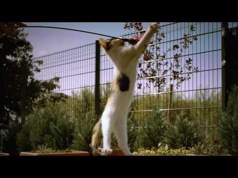 PhantomHD - Kitten in Slow Motion