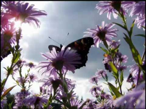 Очень красивая музыка  (релакс неба и цветов)
