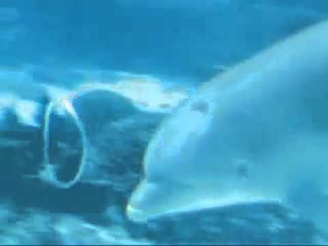 Дельфины играют с кольцами из воды