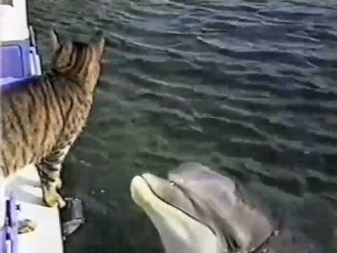 дружба  дельфина с котом
