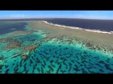 Капельки этого мира - The Ocean