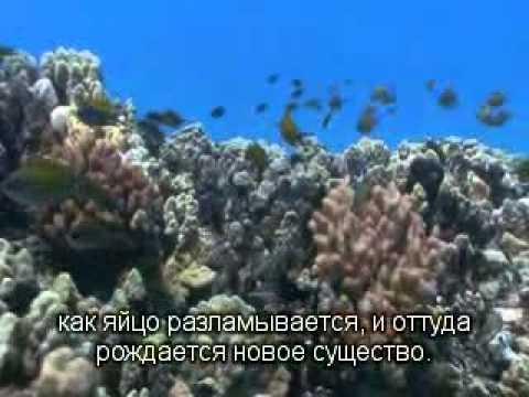 2012 10 12 Муза 11 3 Рождение Нового Человека-2